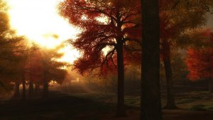 autumn-trees-1475515_1280
